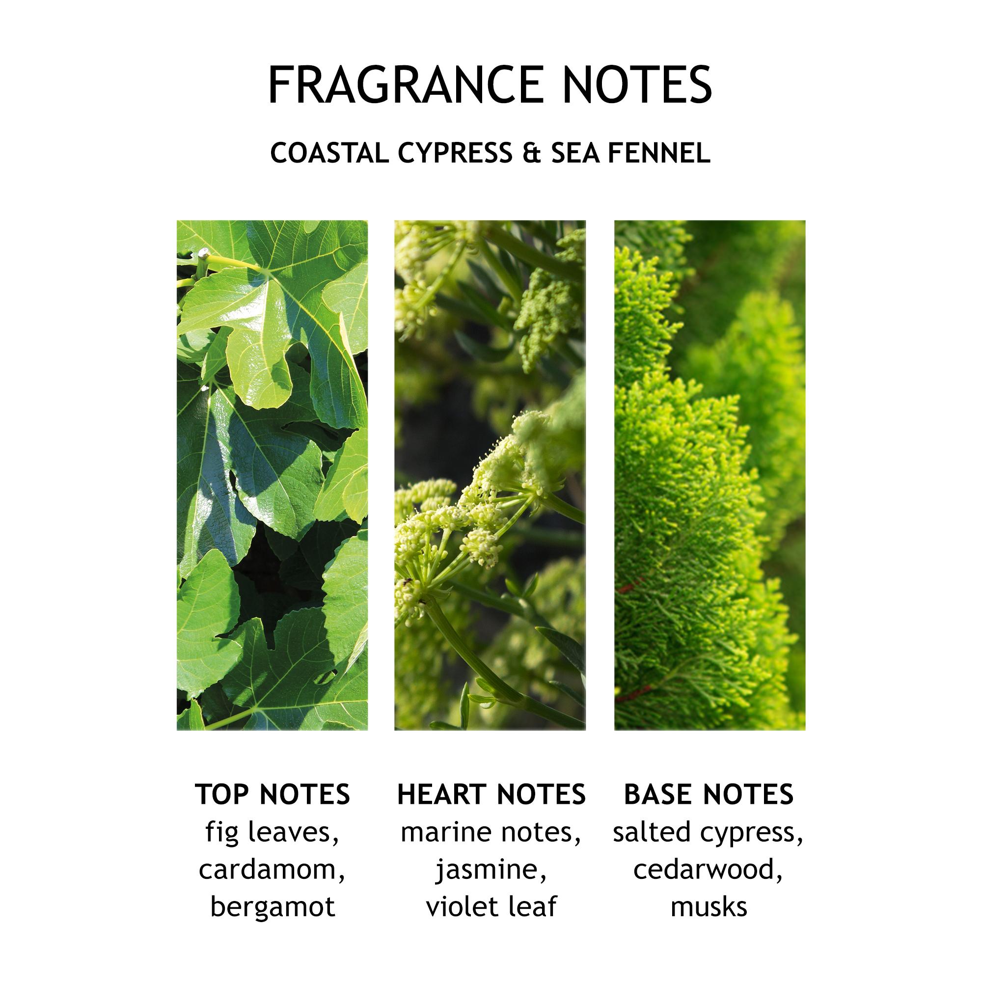 Coastal Cypress & Sea Fennel Liquid Handwash